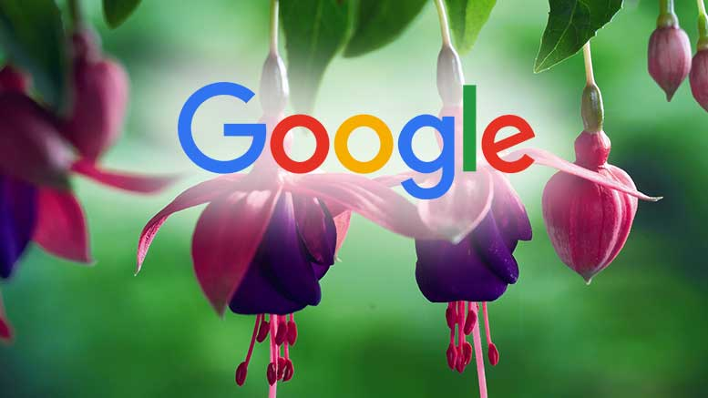 Google New Operating System Fuchsia